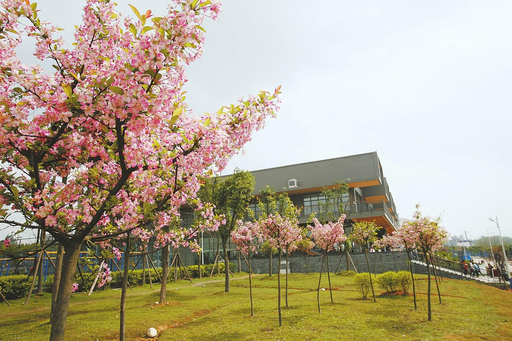 四川科技职业学院校园风景